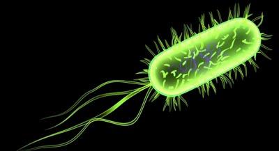 La bacteria E. Coli llevará la poesía en los genes