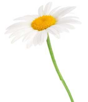 Sag's mit Blumen
