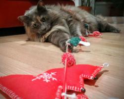 Ein Tier ist kein Weihnachtsgeschenk