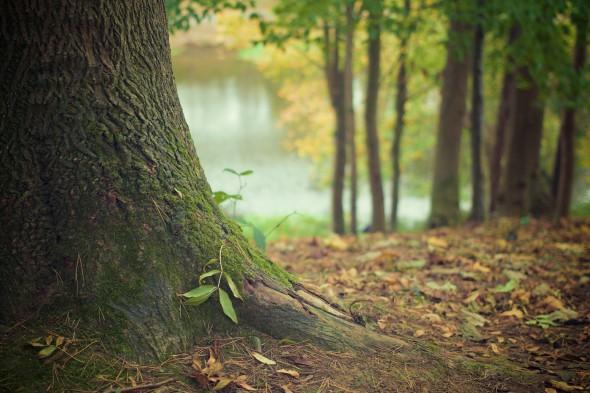 Nuestra conexión con la naturaleza, ¿depende de nuestro contexto cultural?