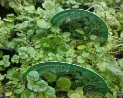 Grün ist Balsam für die Seele